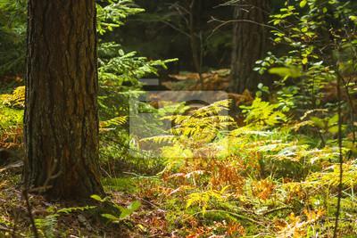 Lasowy natury tło. Niesamowita jesienna natura lasu. Drzewa i rośliny w kolorowym lesie.