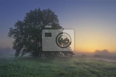 Lato krajobraz trawiasta łąka z drzewami w wczesnym poranku przy wschodem słońca. Białoruś natura w jasny poranek o świcie. Trawa i drzewo przeciw światłu słonecznemu na horyzoncie. Naturel wiejska sc