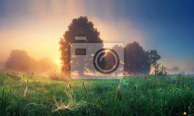 Lato natura krajobraz na wschód słońca w godzinach porannych. Sceneria łąka z trawą i światłem słonecznym za drzewami na horyzoncie. Mglisty poranek. Wiejska perfekcyjna scena naturalnej wsi. Majestat