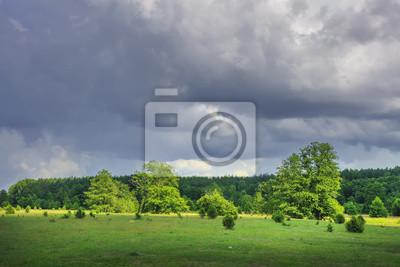 Lato pogodny krajobraz zielona natura z chmurnym niebem po deszczu na trawiastej łące z drzewami i lasem na horyzoncie.