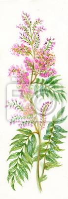 Lato różowy Wildflower