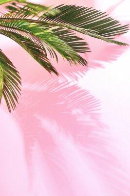Naklejka Lato tropikalny pastelowy tło z palmą
