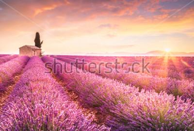 Naklejka Lavender fields at sunrise near Valensole, Provence, France