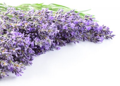 Naklejka Lavender kwiaty tle.