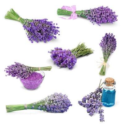 Naklejka Lawenda, Kwiat, Lawenda Kolorowe.