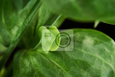 leaf eustoma flowers close up macro shot