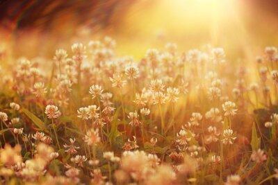 Naklejka Letni krajobraz w tle słońca kwiaty Promienie
