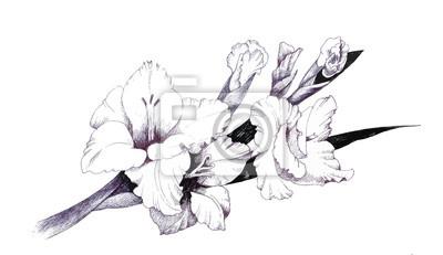 Letni ogród kwitnące kwiaty monochromatyczne ilustracji.