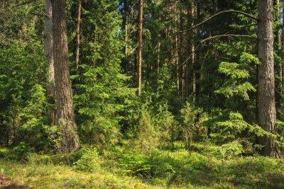 Letni zielony las krajobraz.