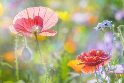 Naklejka letnia łąka z czerwonych maków