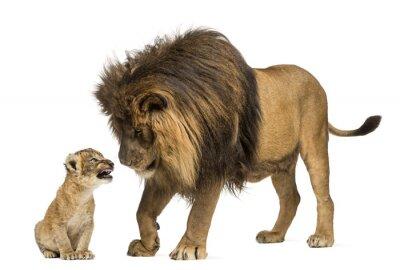 Naklejka Lew stoi i patrząc na lwiątko