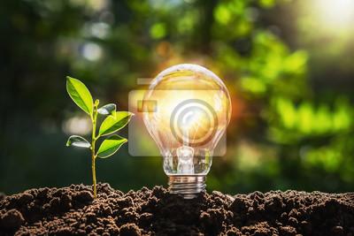 Naklejka lightbulb tree with sunlight on soil. concept save world and energy power