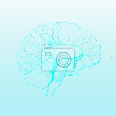 line drawing  brain minimalist, vector illustration for medicine, design print graphics style