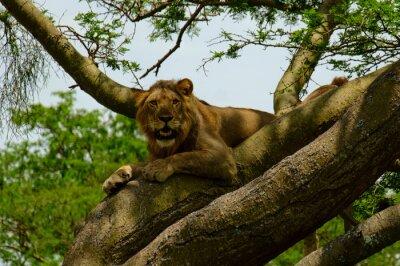 Naklejka Lion 7