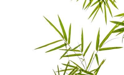 Naklejka liści bambusa samodzielnie na białym tle, strzyżenie TYM ścieżki