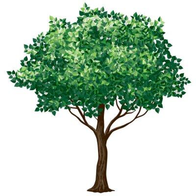 Naklejka Liści drzewa