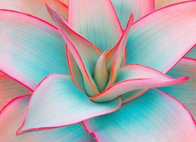 Naklejka liście agawy w modnych pastelowych kolorach do projektowania