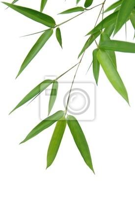 liście bambusa