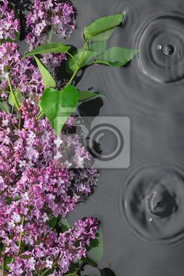 Liście i kwiaty bzu w wodzie w deszczu