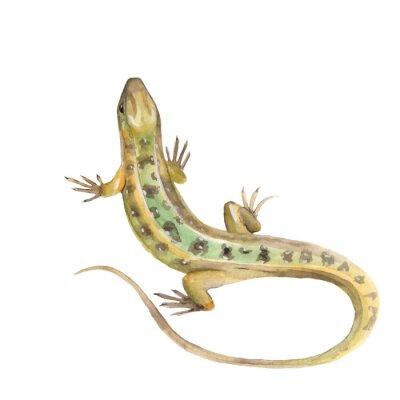 Naklejka Lizard. Akwarele ilustracji w wektorze