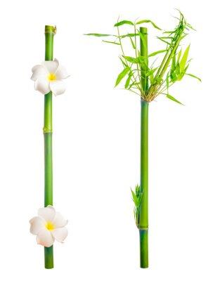 Naklejka łodygi z liśćmi bambusa i frangipani kwiat jest izolowana na