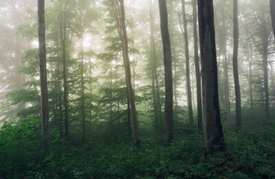 lush vegetation in green forest during rain