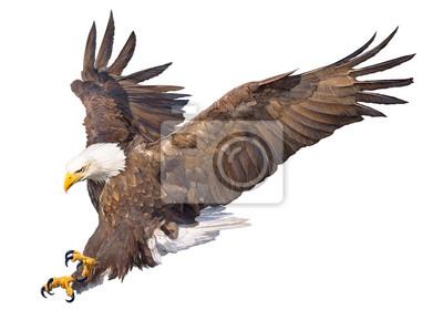 Naklejka Łysy eagle swoop ręcznie rysować ręcznie narysować i malować na białym tle zwierząt dzikiej przyrody ilustracji wektorowych.