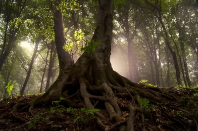 magical tree in forest, fairytale woods landscape