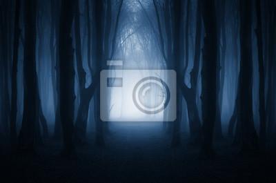 magiczna leśna ścieżka, surrealistyczny krajobraz