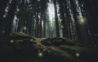 Magiczne światła musujące w tajemniczym lesie w nocy