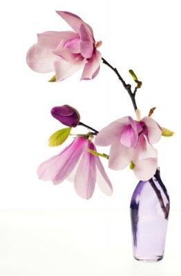 Naklejka Magnolia Jane Kwiaty