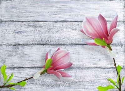 Naklejka Magnolia kwiaty na tle shabby drewnianych desek