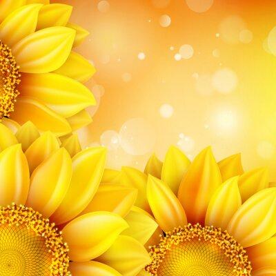 Naklejka Makro Sunflower background. EPS 10