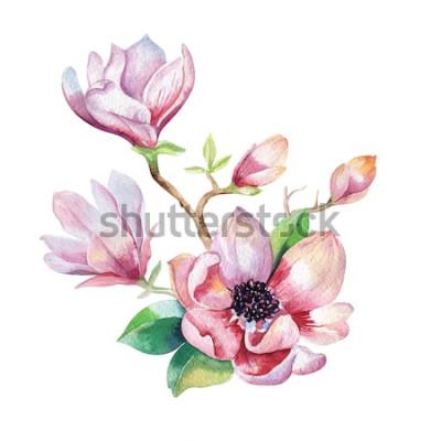 Naklejka Malowanie tapety kwiat magnolii. Ręcznie rysowane akwarela ilustracja kwiatowy. Kwiatowy naturalny element dekoracyjny. Sztuka watecolour tło.