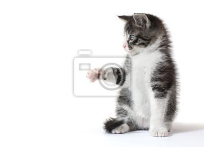 Mały kotek połowu coś