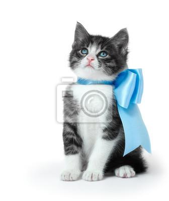 Mały kotek z kokardą na białym tle