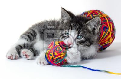 Mały kotek z kulą przędzy