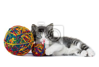 Mały kotek z kulą przędzy na białym tle