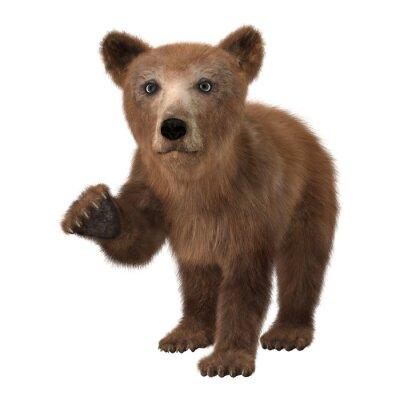 Naklejka Mały niedźwiedź brunatny