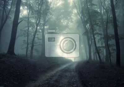 man walking w zielonym lesie z mgły