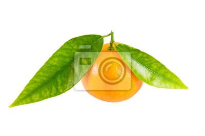 Mandarin izolowane