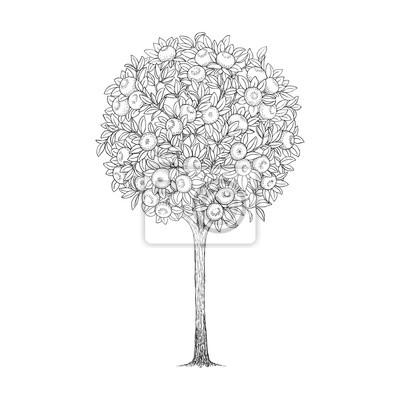 Mandarin tree, hand drawn illustration.