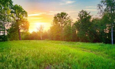 Naklejka Meadow with green grass