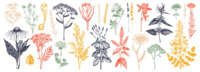 Naklejka Medicinal herbs collection. Vector set of hand drawn summer florals, herbs, weeds and meadows. Vintage plants illustration. Botanical elements in engraved style. Wild flowers outlines set.