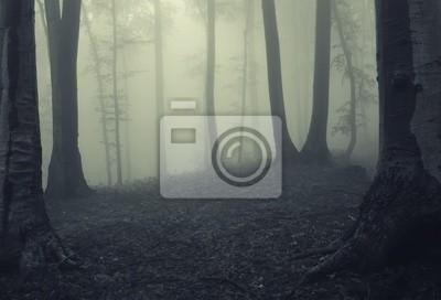 Mgła w ciemnym lesie