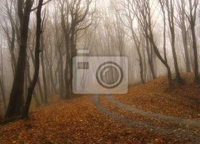 mgła w kolorowym lesie jesienią