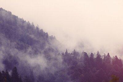 Naklejka Mgła w lesie