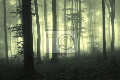 Mgła w lesie z drzew w świetle licznika