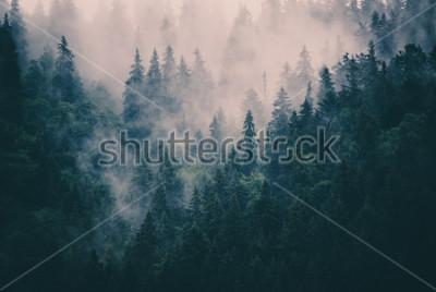 Naklejka Mglisty krajobraz z jodły w stylu retro hipster