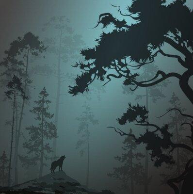 Naklejka mglisty krajobraz z sylwetką lasu, sosny i wilk, księżyca